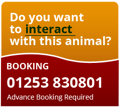 Book an interaction with an animal in Blackpool Zoo