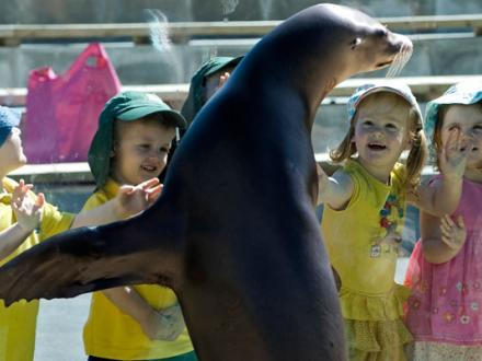 A-Zoo Nursery children meeting a sealion at Blackpool Zoo