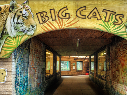 Big Cat House